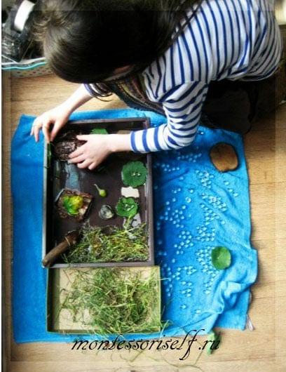 изучаем лягушку