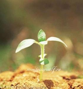 картинка росток