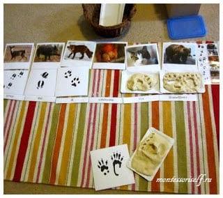 Следы животных для детей 3