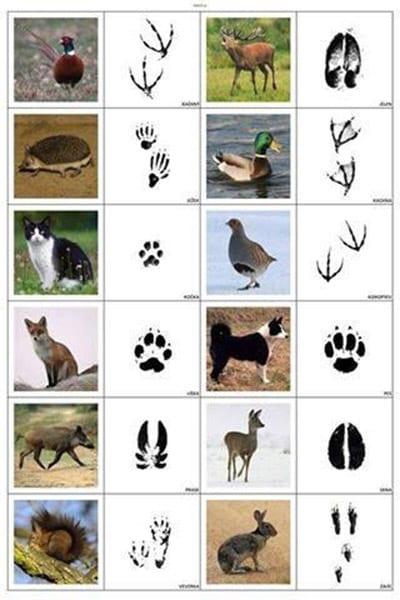 Следы животных с картинками