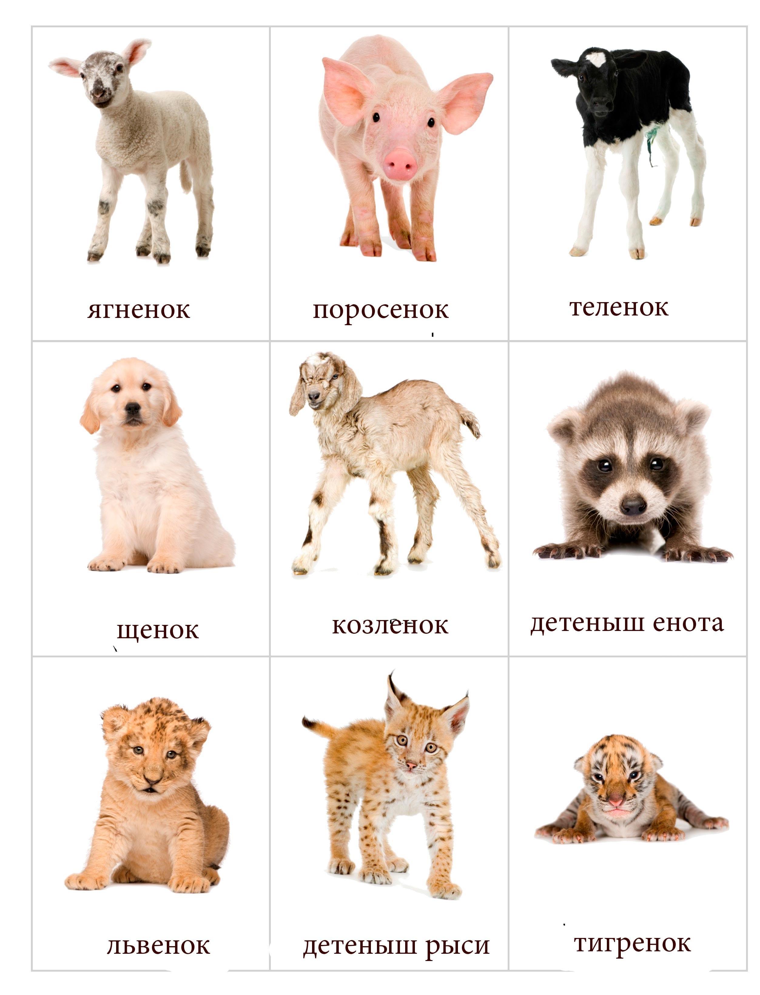 Картинки с детенышами животных 1