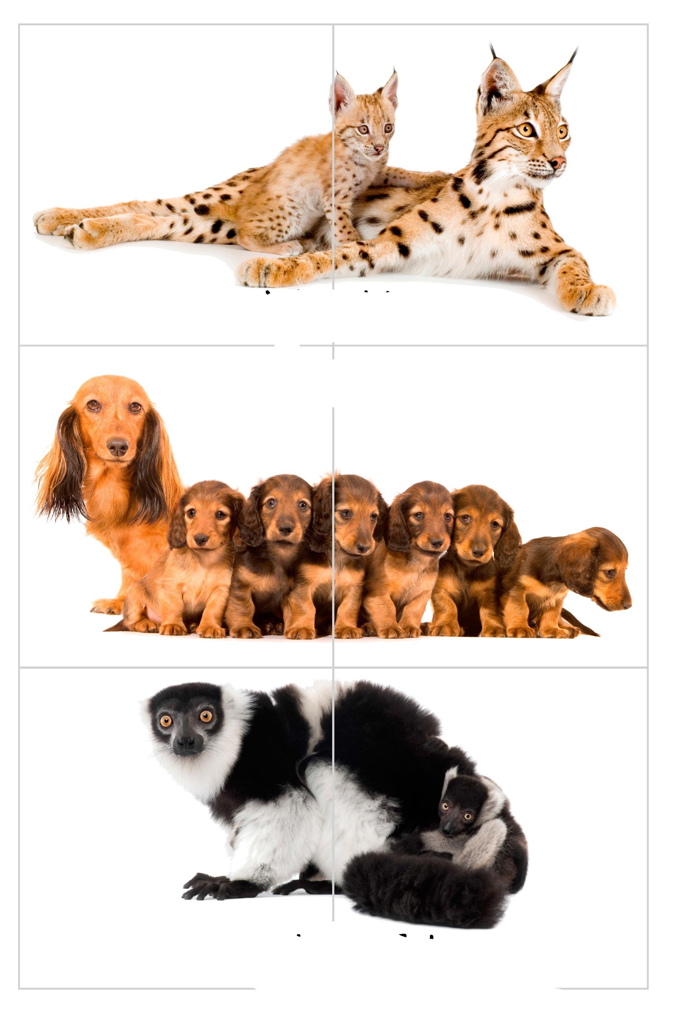 пазлы дети животных 2