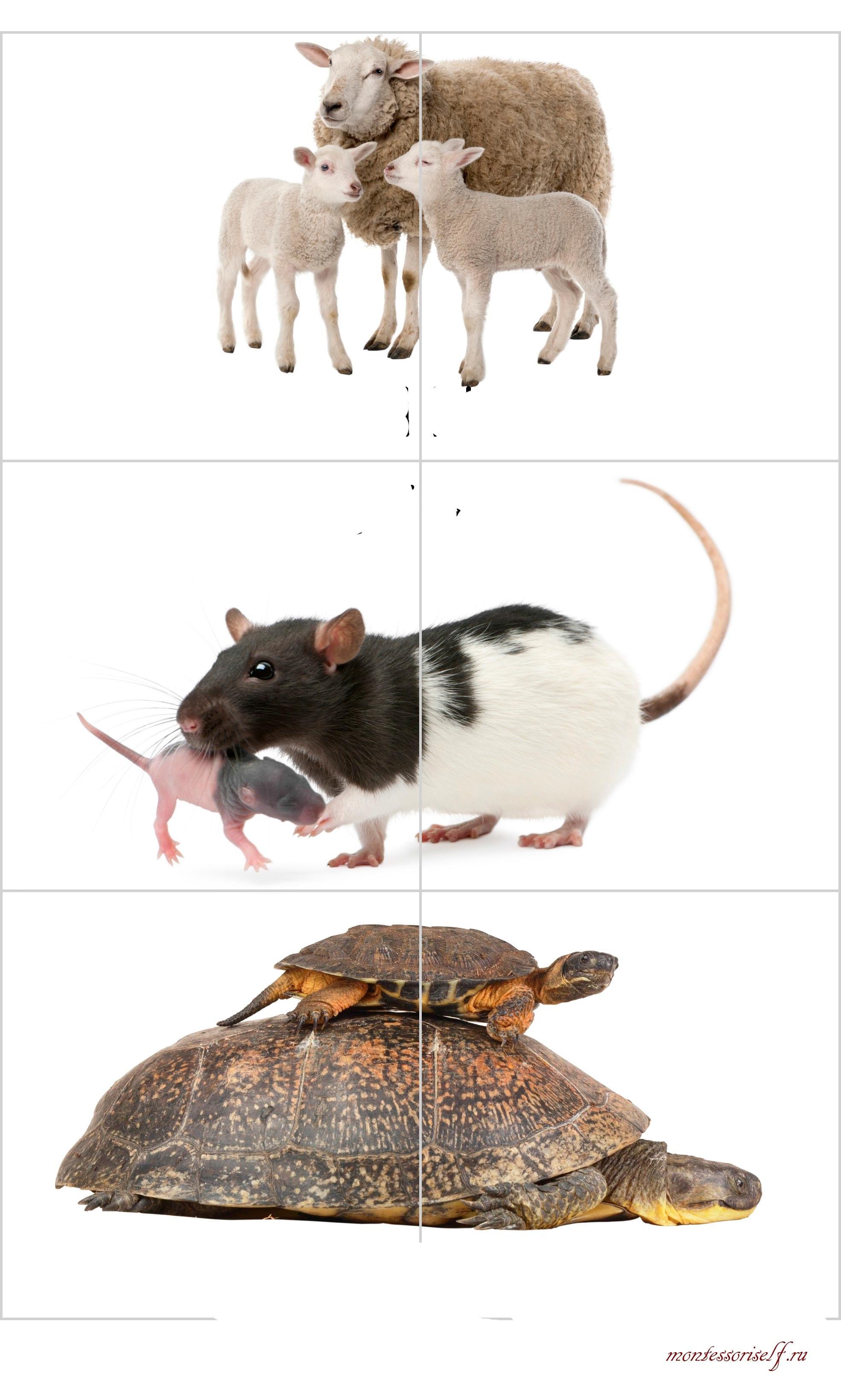 пазлы дети животных
