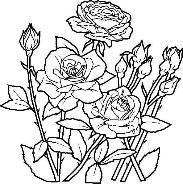 Раскраска цветов