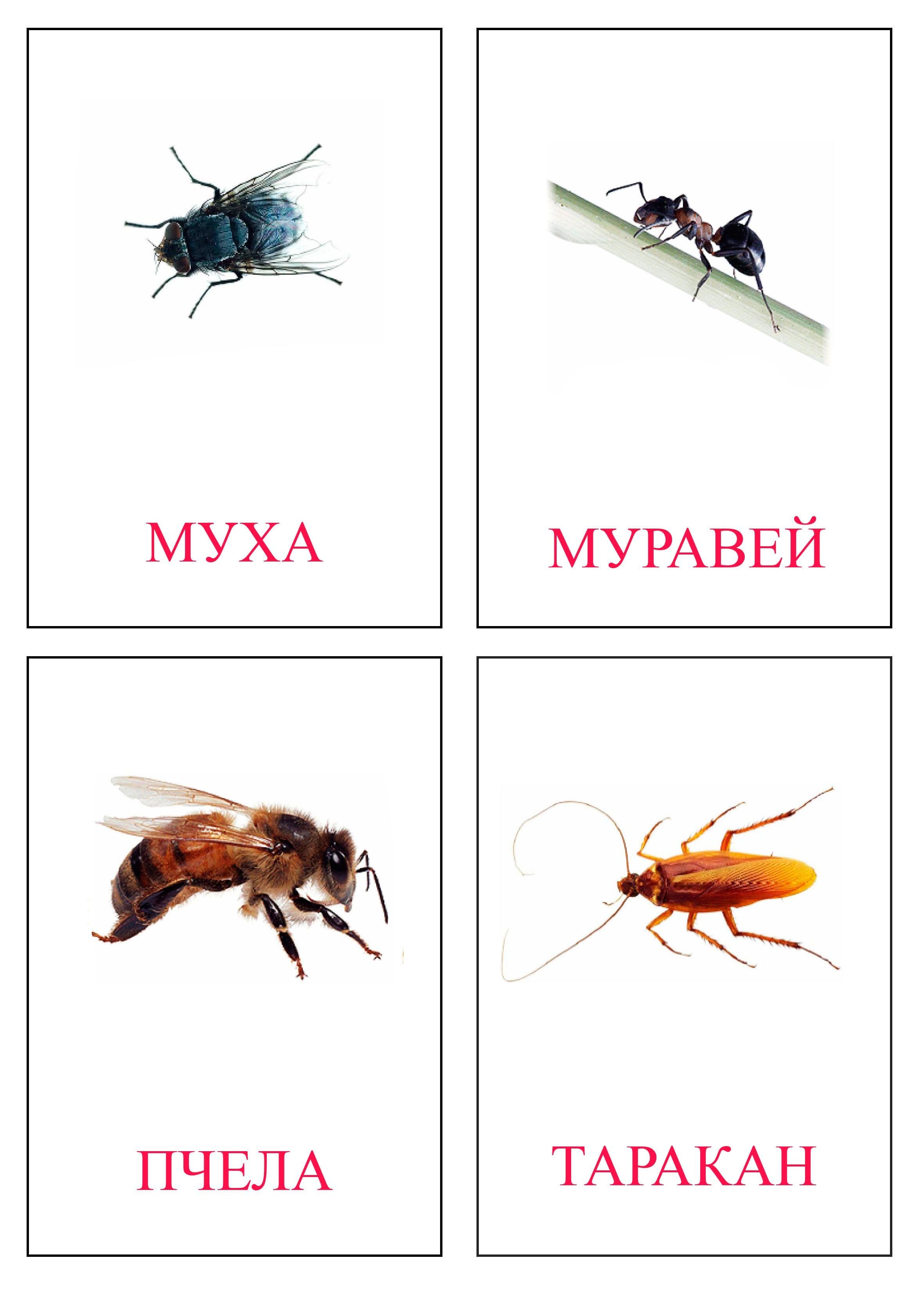 Скачать карточки «картинки насекомых» Пасха Рисунки Карандашом
