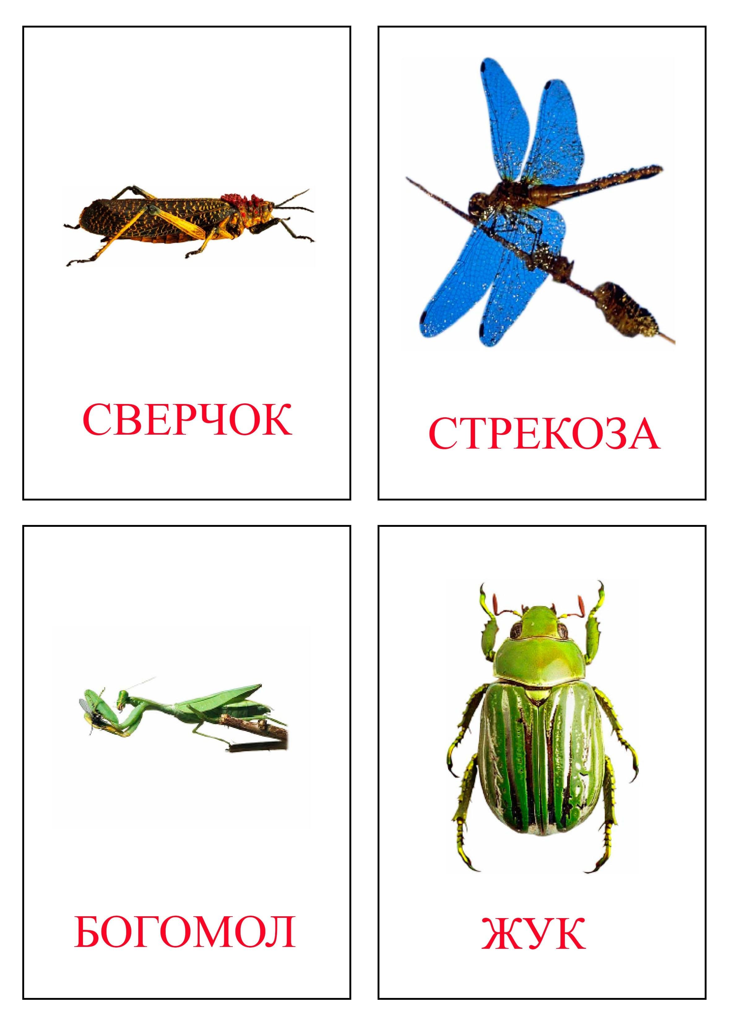 Насекомые фото для детей с названиями