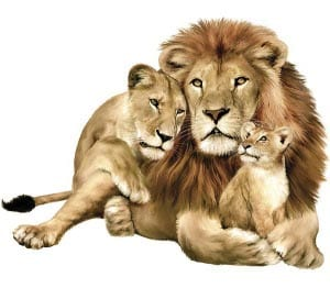 Семья львов картинка для детей
