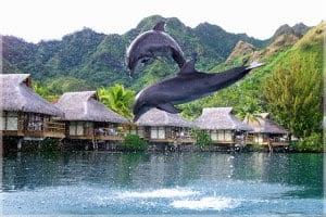 дельфины - это прекрасные существа