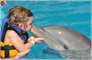 плавание с дельфинами это счастье и чудесный опыт