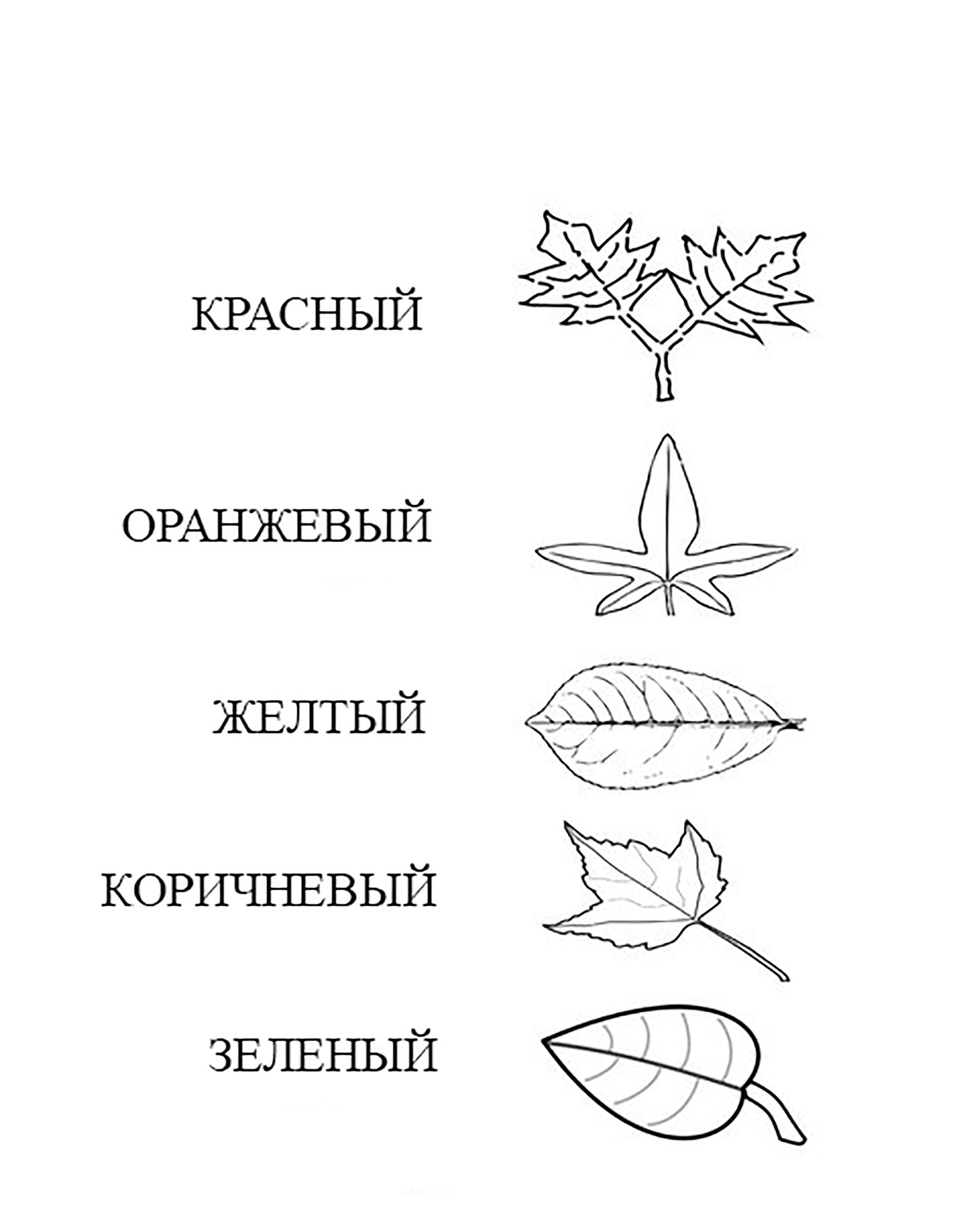 Раскрась листики