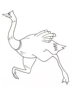 страус картинка для детей 6