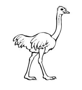 страус картинка для детей 9