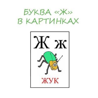 Буква Ж в картинках