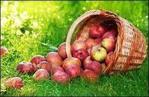 яблоко картинка для детей 3