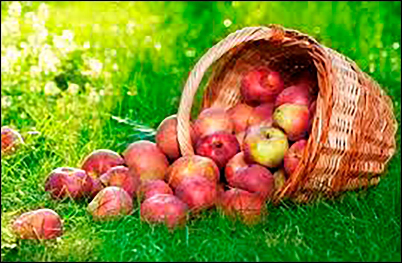 Рисунок яблоня с яблоками для детей