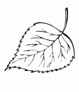 раскраска лист березы