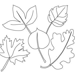 раскраска осенние листья 5