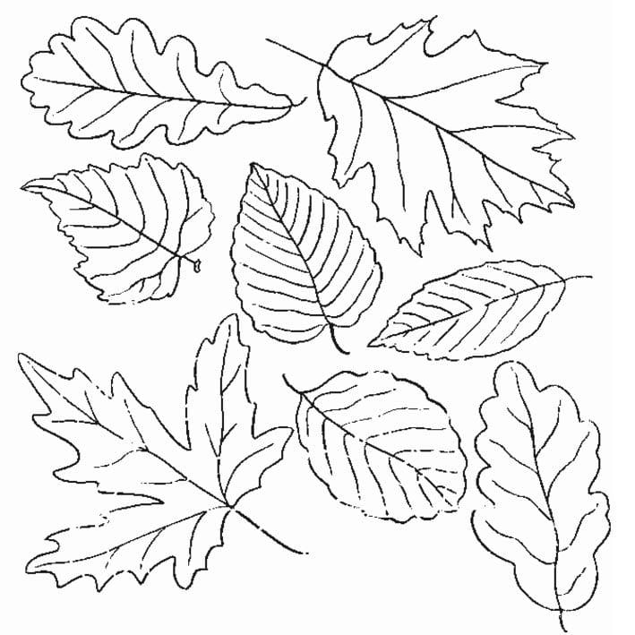 Осенние листья раскраски для детей