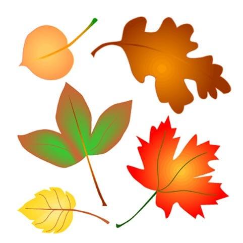Фотографии осеннего леса в хорошем качестве