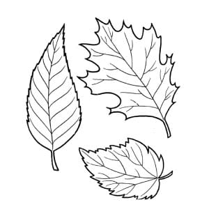 Раскраска осенние листья 3