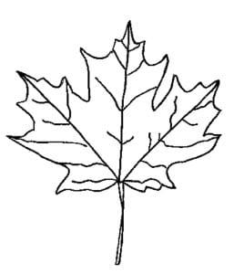 раскраска лист клена 1