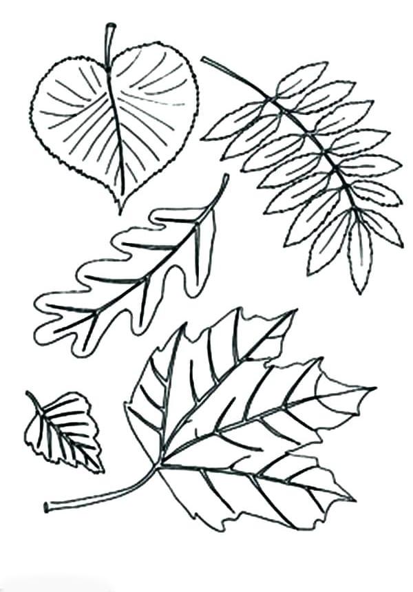 Разные листики