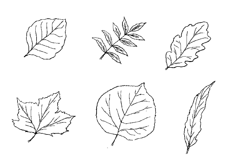 Раскрась осенние листья