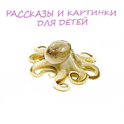 картинка осьминог