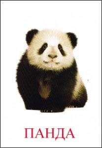 панда картинка
