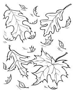 раскраска листопад