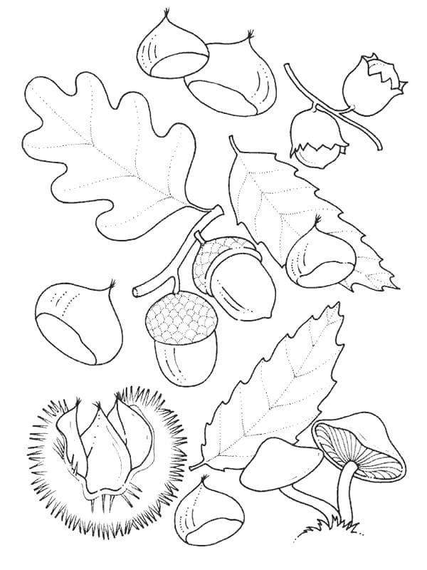 Раскраска с осенними листьями, желудями, орехами и грибами