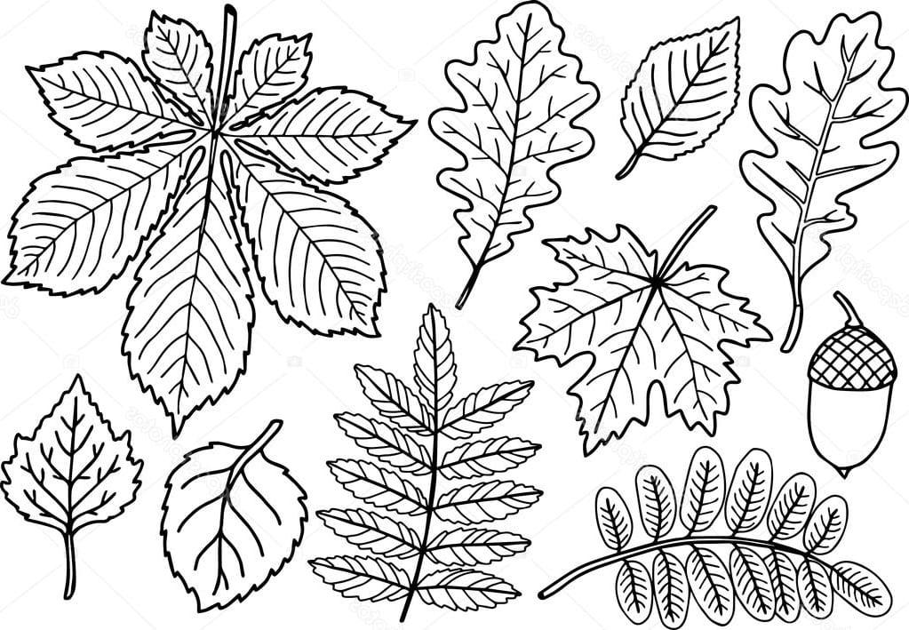 """Раскраска """"осенние листья"""" с желудем и каштаном"""