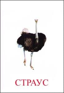 страус картинка для детей 1
