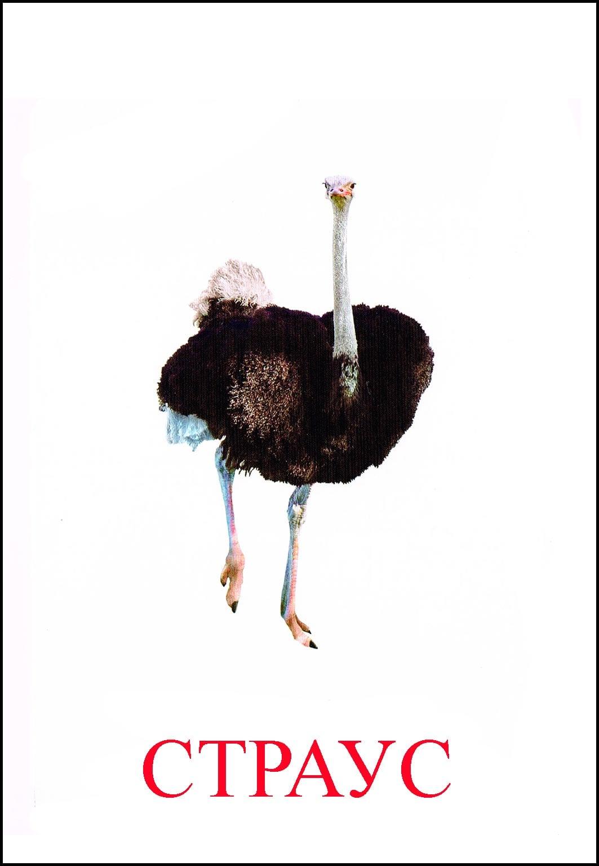Как сделать страус своими руками фото 454