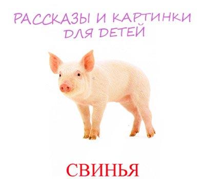 свинка картинка