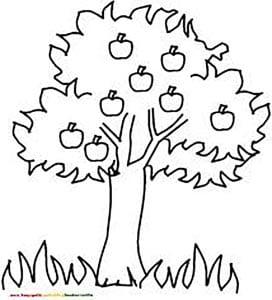 яблоня раскраска 1