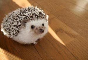 photo hedgehog for children 3