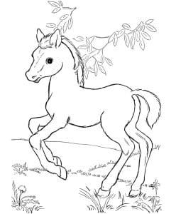 раскраска лошадь для девочек 3