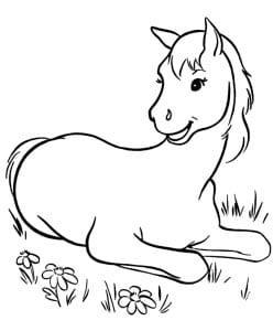 раскраска лошадь 7