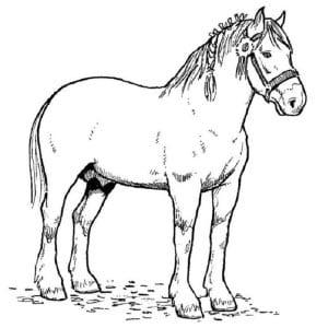 Раскраска лошадь 2