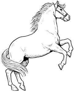 раскраска лошадь 4