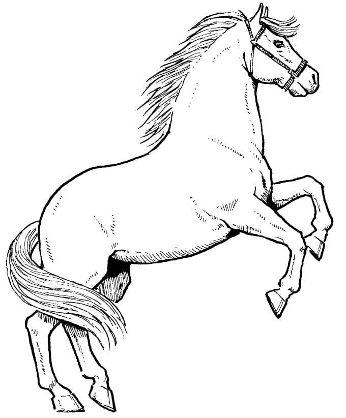 Раскраска коней и лошадей