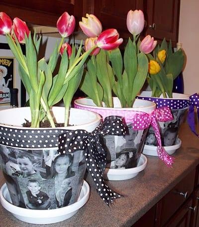 Подарок на День Матери - горшочек с тюльпанами