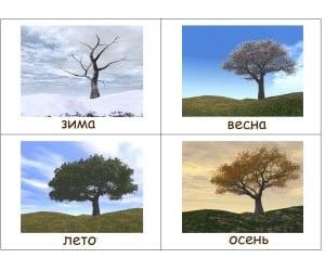 дерево в разное время года