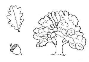 Раскраска дуб лист дуба желудь