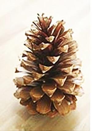 Новогодняя поделка елка из шишек 1
