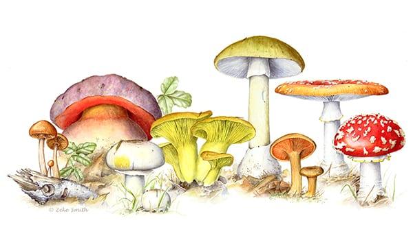 Картинка с грибами №2