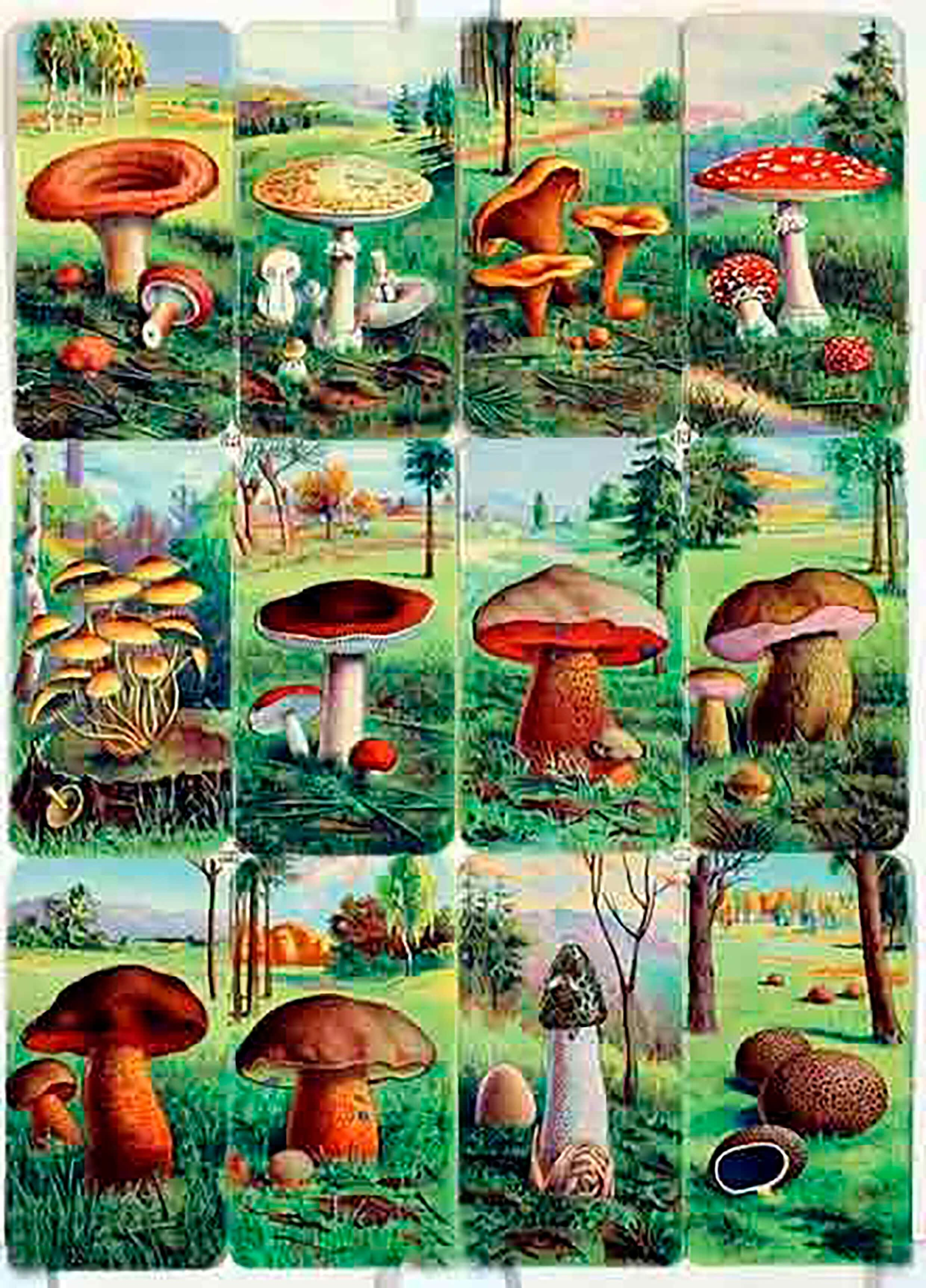 Карточки с грибами