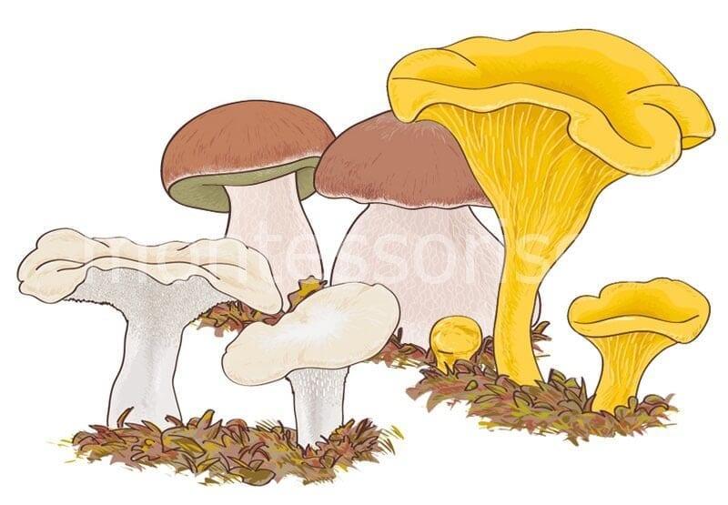 Картинка с грибами №1