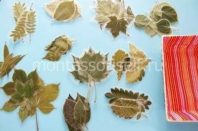 """Пособие """"листья"""""""
